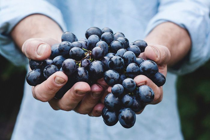 Grape-based compounds kill colon cancer stem cells